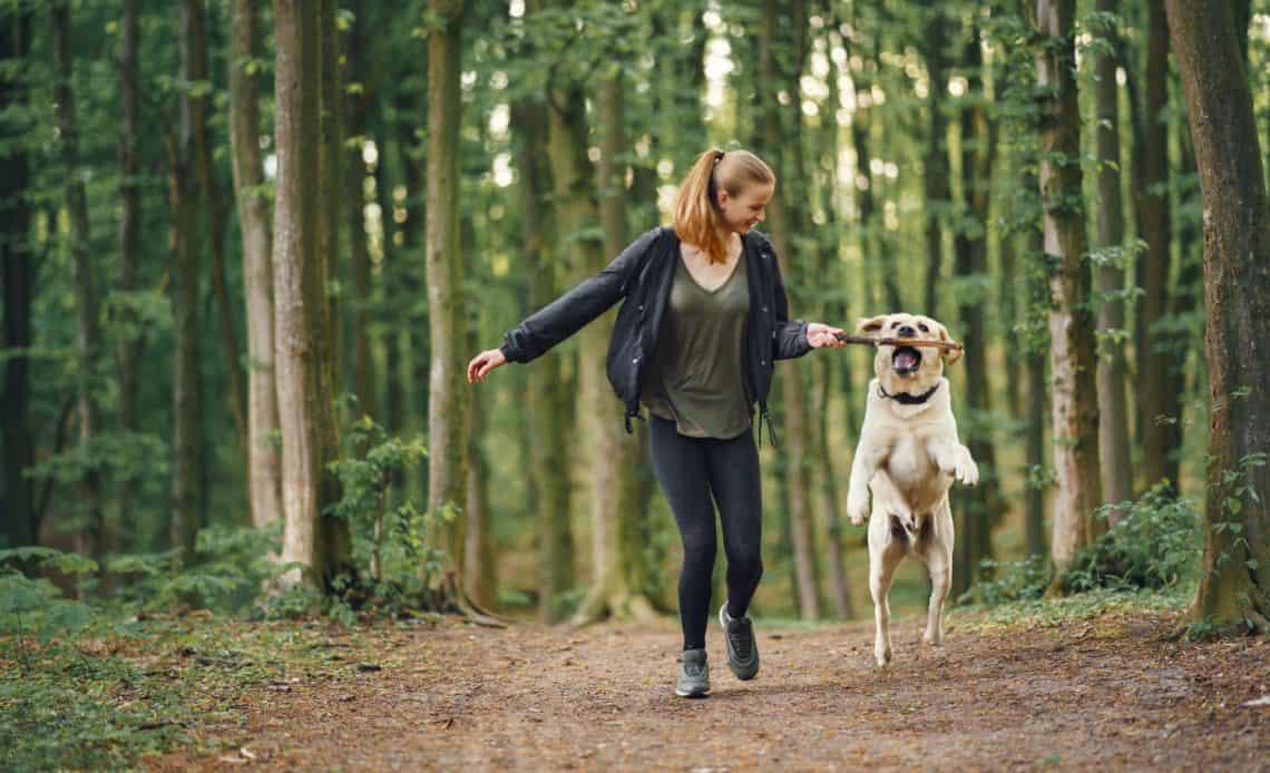 Spacer z psem – co zabrać ze sobą by nie było nudno