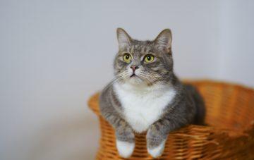 Kot - idealny zwierzak dla singla?