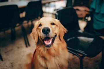 Planujesz adopcję psa? To musisz wiedzieć wcześniej